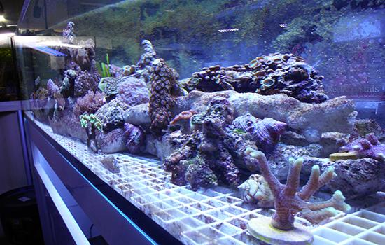 corales (38)