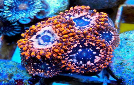 corales (39)