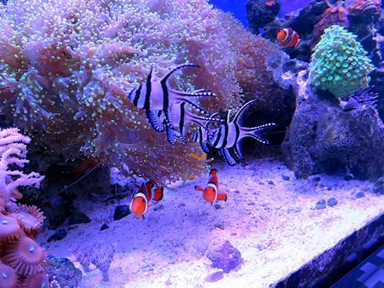 corales (43)