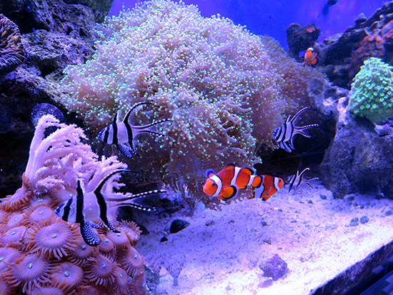 corales (44)