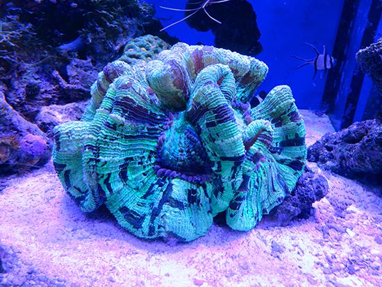 corales (45)