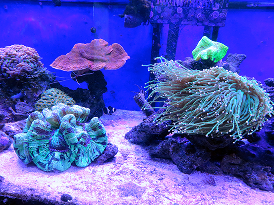 corales (46)