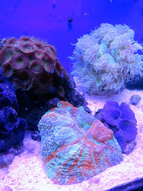 corales (47)