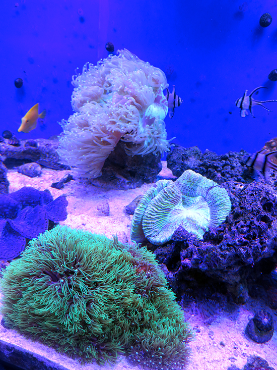 corales (48)