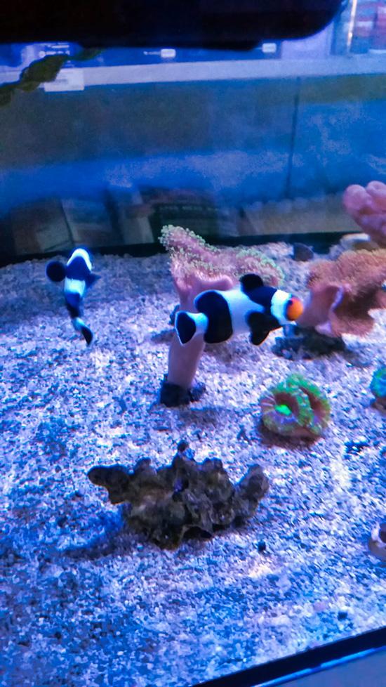corales (5)