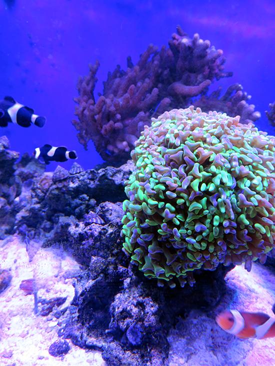 corales (50)