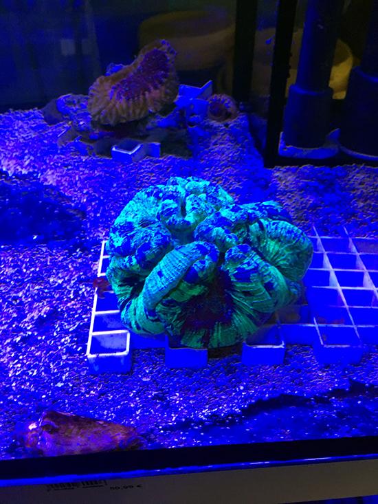 corales (51)