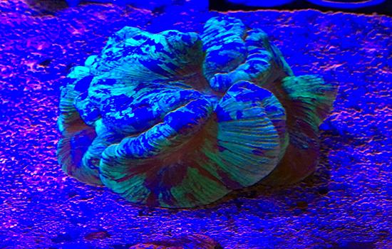 corales (52)