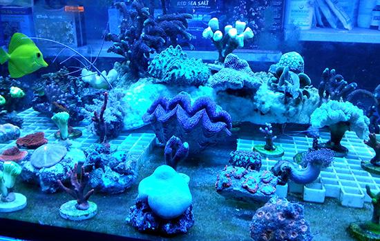 corales (55)