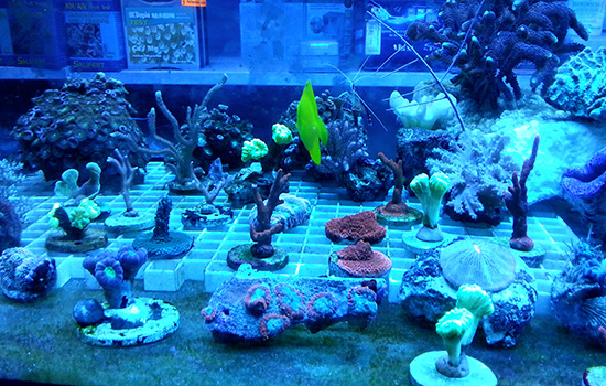 corales (56)