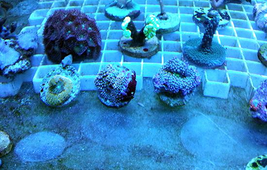 corales (57)