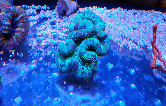 corales (59)