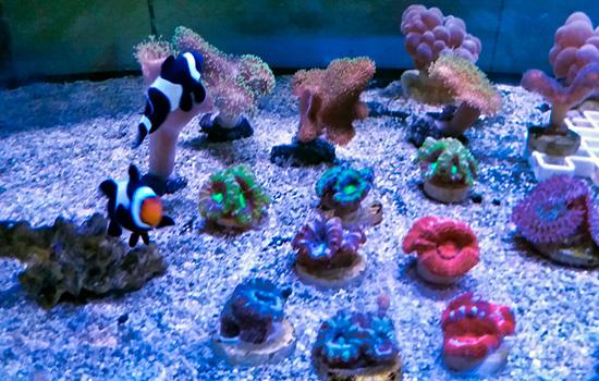 corales (6)