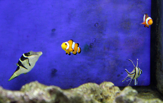 corales (60)