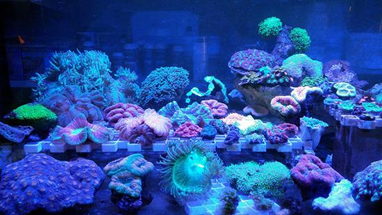 corales (63)