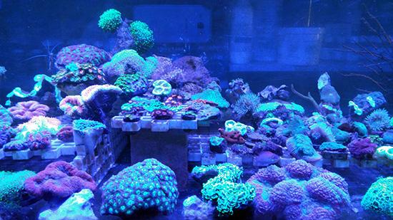 corales (64)