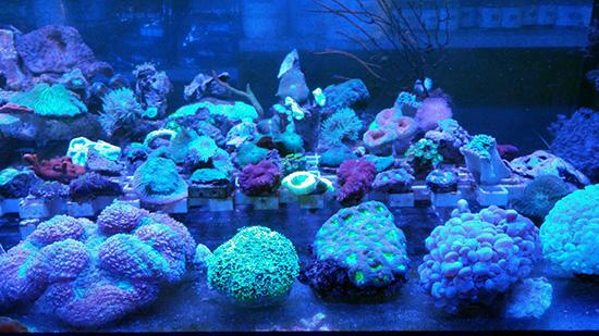 corales (65)