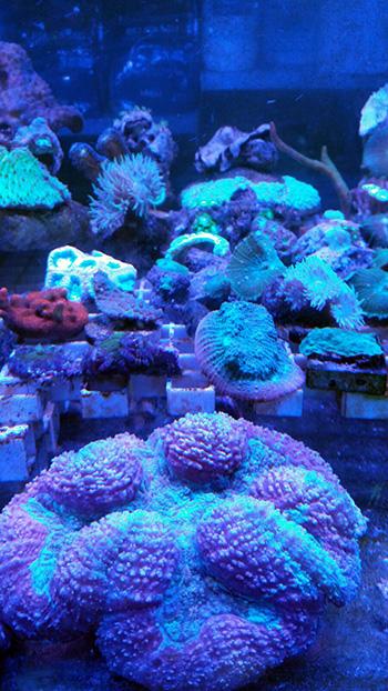 corales (66)