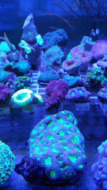 corales (67)