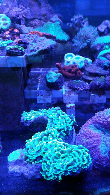 corales (68)