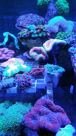 corales (69)