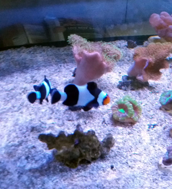 corales (7)