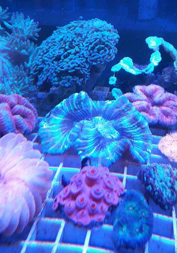 corales (70)