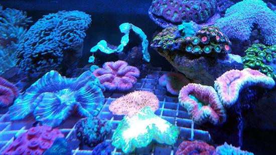 corales (71)