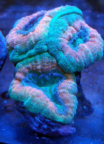 corales (73)