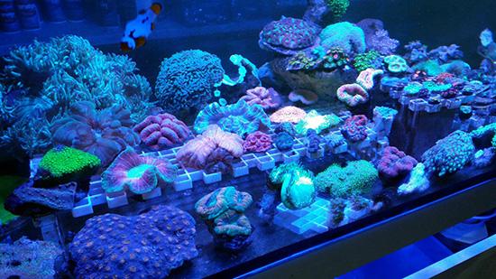 corales (74)