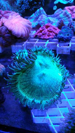 corales (75)
