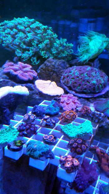 corales (77)