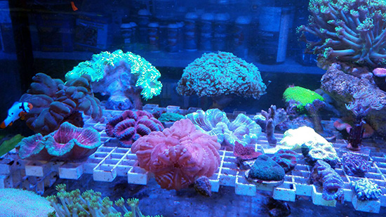 corales (78)