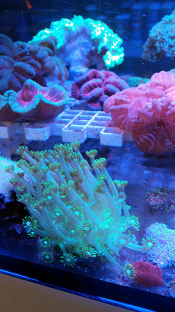 corales (80)