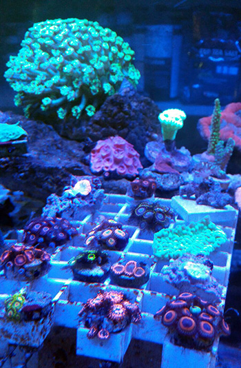 corales (81)