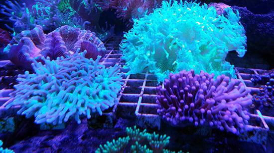 corales (82)