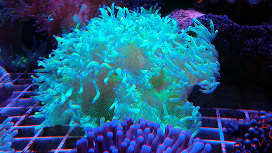 corales (83)