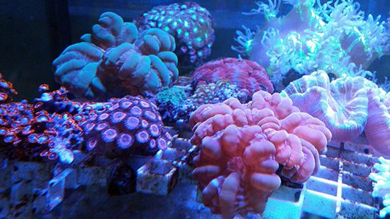 corales (84)