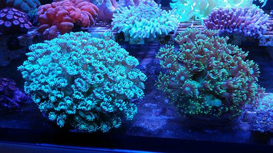 corales (85)