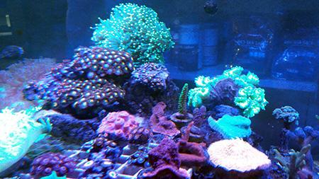 corales (86)