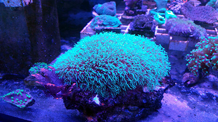 corales (87)