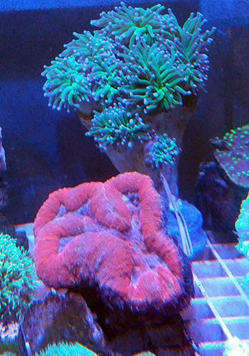 corales (88)