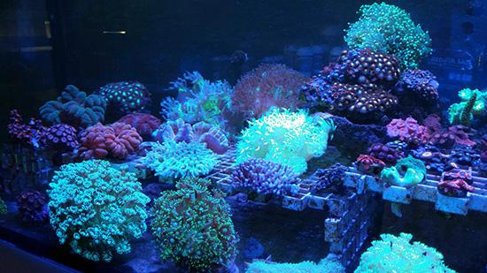 corales (89)