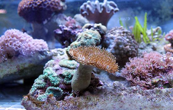 corales (9)