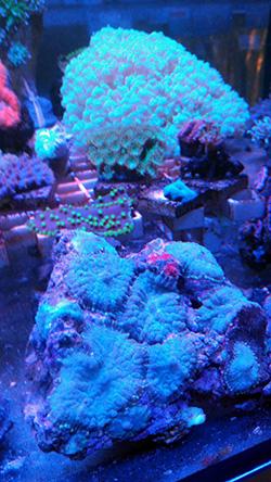 corales (90)