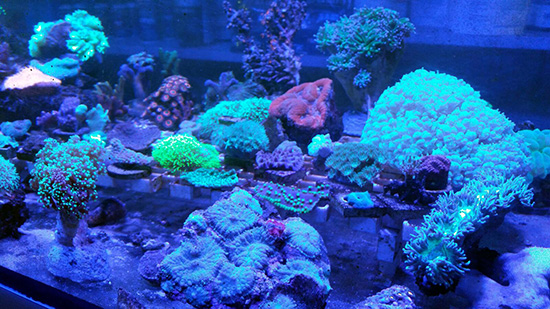corales (91)