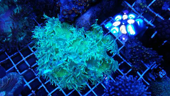 corales (92)