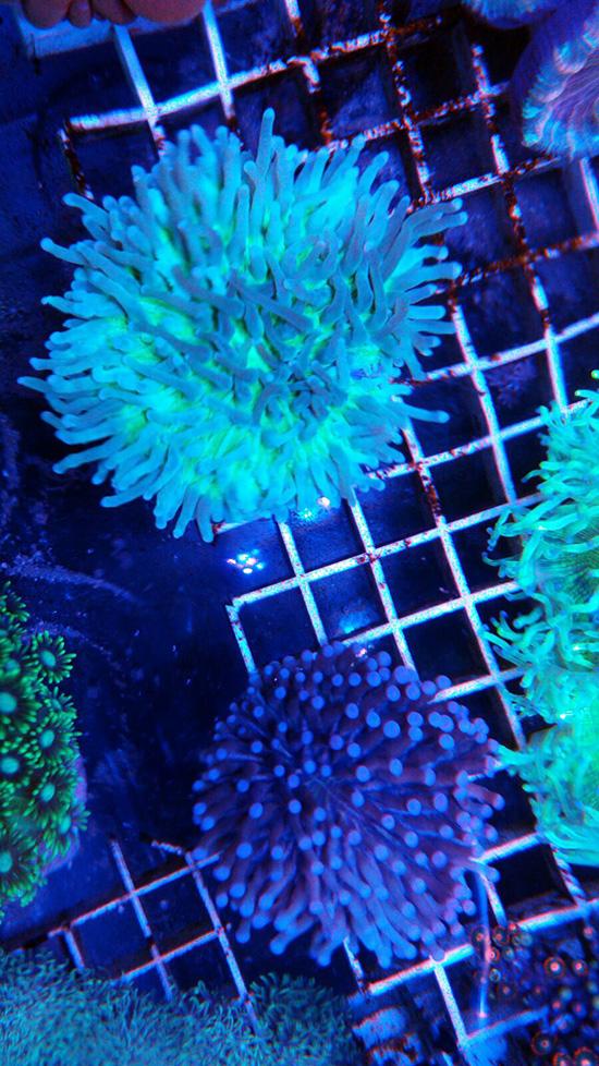 corales (93)