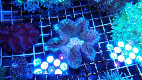 corales (94)