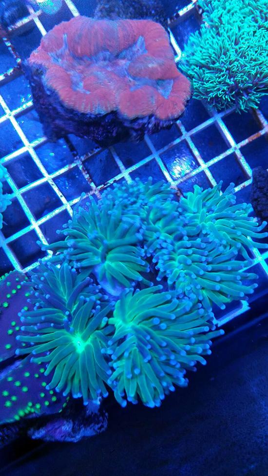 corales (95)